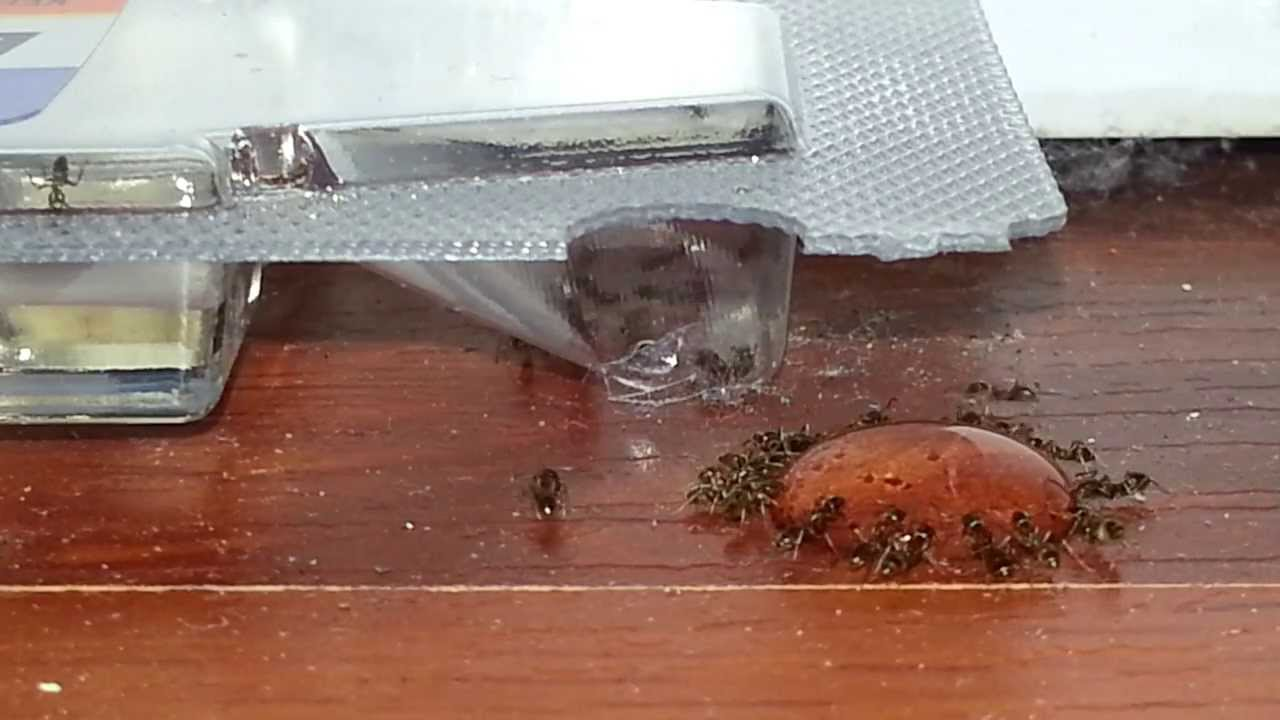 raid ant trap instructions