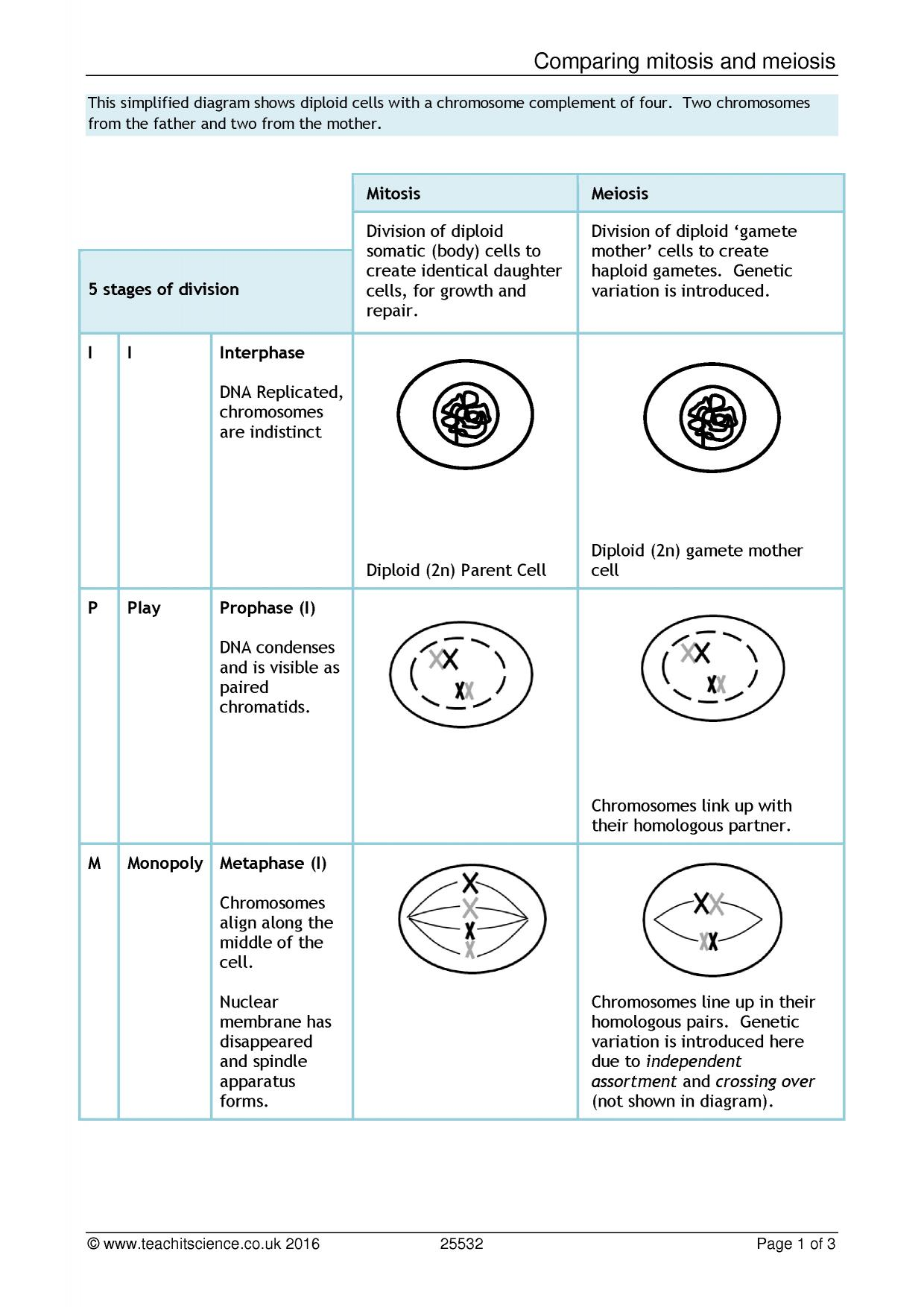 Mitosis And Meiosis Word Search Pdf